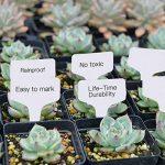 200pcs t-type PVC imperméable marqueurs T Tag plante - Premium Nursery Garden étiquettes - Eco Friendly - blanc grisâtre (6 x 10cm) de la marque Kalolary image 5 produit
