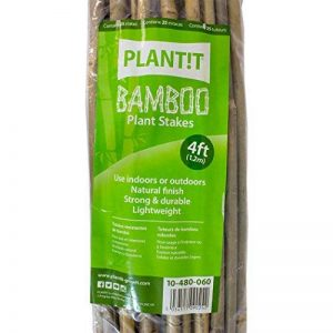 25x Tuteurs / Tiges de bambou naturel pour plantes 6/8mm (120cm) de la marque Plant It image 0 produit