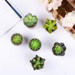 6 PCS YQing Plantes Succulentes Artificielles Vertes Pot Plantes Grasses Home Garden Table Déco de la marque YQing image 2 produit