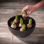 Artstone Pot de fleurs, Coupe de fleurs Fiona, résistant au gel et ultraléger, Noir, 31x15cm de la marque Ivyline image 2 produit