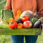 Augola biodégradable Fibre Pots de semences pour semis avec 100 pcs Plastique étiquettes pour plantes de la marque Augola image 6 produit