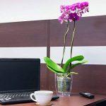 Cache pot a orchidees Coubi vert transparent 16 cm de la marque Prosperplast image 2 produit