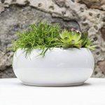 Cache pot rond Piano en ceramique, bas bol, en blanc, diam. 24 cm de la marque Polnix image 2 produit