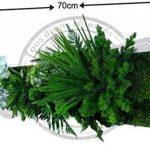 cadre végétal blanc TOP 4 image 1 produit