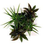 cadre végétal blanc TOP 5 image 2 produit
