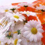 cadre végétal blanc TOP 6 image 1 produit