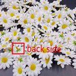 cadre végétal blanc TOP 6 image 4 produit