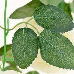 cadre végétal blanc TOP 9 image 3 produit