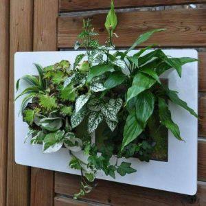 Cadre végétaux 2 tailles - Plusieurs couleurs - Arrosage sans décrocher du mur - Système breveté - Made in France - Prêt à repiquer (Double: 48x30 cm, Blanc) de la marque BN VEGETAL image 0 produit