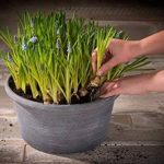 Cera-Mix Pot de fleurs, Coupe de fleurs Natural, résistant au gel et ultraléger, Greywash, 32x16cm de la marque image 1 produit