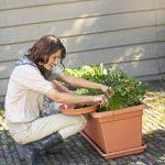 Elho 2055436 Green Basics Garden Pot de Fleurs Noir Taille XXL 100 x 50 x 42 cm de la marque Elho image 2 produit