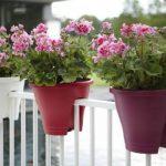 Elho Corsica Flower Bridge Jardinière Balcon 30cm - Cerise de la marque Elho image 1 produit