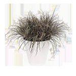 Elho Loft Urban Rond Roues Cache Pot 40cm - Blanc de la marque Elho image 3 produit