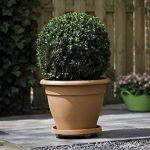 Elho PlantTaxi Soucoupe à roulettes pour pot de fleurs Terra 30 cm de la marque Elho image 1 produit