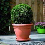 Elho PlantTaxi Soucoupe à roulettes pour pot de fleurs Terra 30 cm de la marque Elho image 2 produit