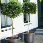 Elho Pot à fleurs Green basics Vert Feuilles Taille 40 cm 8733053936000 de la marque Elho image 2 produit