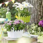 Emsa 2040175 Landhaus Coupe Pot de Fleurs Vert 26 x 25 x 17 cm de la marque Emsa image 3 produit