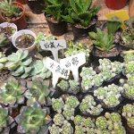 étiquette plantes au jardin TOP 6 image 4 produit