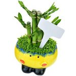 Etiquettes Plantes, Ishua 100 pcs 6 x10 cm Plante en plastique type T balises marqueurs Nursery Jardin étiquettes Gris (Blanc) de la marque Ishua image 4 produit