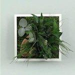 FLOWERBOX Tableau Nature Mono avec Plantes Stabilisées de la marque FLOWERBOX image 2 produit