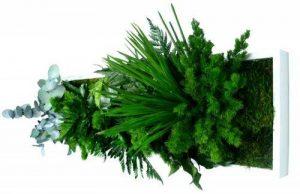 FLOWERBOX Tableau Nature Panoramic avec Plantes Stabilisées 20x72cm de la marque FLOWERBOX image 0 produit