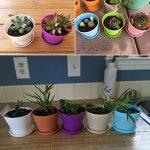 G2PLUS Lot de 8pots de fleurs 10cm Résine semis Chambre d'enfant avec palette en 8couleurs Meilleur Choix pour la viande des plantes et autres plantes de petite taille de la marque G2PLUS image 2 produit