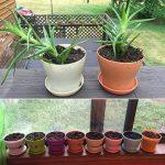 G2PLUS Lot de 8pots de fleurs 10cm Résine semis Chambre d'enfant avec palette en 8couleurs Meilleur Choix pour la viande des plantes et autres plantes de petite taille de la marque G2PLUS image 3 produit