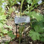 GardenMate® Banner Lot de 25 marque plantes en acier galvanisé métal zinc de la marque GardenMate® image 3 produit