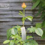 GardenMate® Lot de 25 étiquettes à suspendre en tôle zinguée inoxydable avec fils inox de la marque GardenMate® image 1 produit
