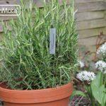 GardenMate® Vertiko Lot de 25 marque plantes en acier galvanisé métal zinc de la marque GardenMate® image 2 produit