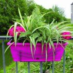 Jardinière Jardinière de balcon Rose–Set avec support–Longueur 50cm–Réservoir d'eau–Plastique de la marque Jardifer image 1 produit
