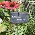 jardinière inox TOP 5 image 2 produit
