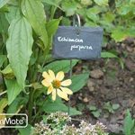 jardinière inox TOP 5 image 4 produit