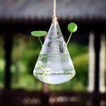 jarre pour plantes TOP 5 image 2 produit