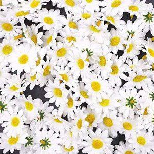 JZK 100 x Lifelike artisanat blanc artificiel marguerite tissu fleurs têtes, La table de fête de mariage diffuse les confettis, accessoires de scrapbooking bricolage, décorations de cartes de la marque JZK image 0 produit