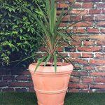 Lot de 2grandes jardinières rondes - Effet terre cuite - Diamètre: 55cm - Hauteur: 49cm de la marque Victorian Garden & Lighting Company image 3 produit