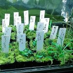marqueur plante TOP 5 image 2 produit