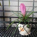 Milong Pot de fleurs à suspendre étagère Railing support de plantes de balcon support pour pot de fleurs Noir extérieur Fleur Cadre, Noir , 30 cm de la marque MiLong image 2 produit