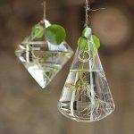 Pinzhi Verre Fleur Plante Stand / Pendentif Vase Boule Terrarium Conteneur Home Decor de la marque Pinzhi image 4 produit