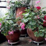plateau pour plantes TOP 14 image 2 produit