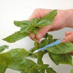 plateau pour plantes TOP 2 image 3 produit