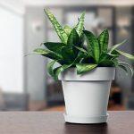 Pot de fleur avec soucoupe en plastique Lofly, classique, 50 cm diam, gris de la marque Prosperplast image 3 produit