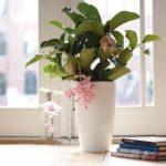 pot de fleur très grande taille TOP 2 image 1 produit