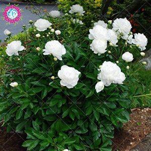 pot de fleur très grande taille TOP 6 image 0 produit