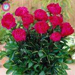 pot de fleur très grande taille TOP 6 image 1 produit