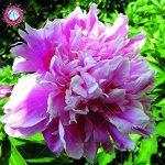 pot de fleur très grande taille TOP 6 image 3 produit