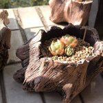 Pot de fleurs en ciment imitation bois en forme de tronc d'arbre - Par Agent T, kaki, S de la marque Agent T image 4 produit