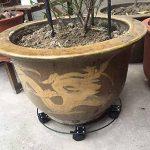 Rokoo Caddy extérieur de plante d'intérieur avec des roues Heavy Duty Fer en pot usine fleur Pot Rack Stand titulaire de la marque Rokoo image 3 produit