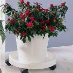 Rucco V122 Support à roulettes pour pot de fleurs Blanc Diamètre 34cm de la marque Rucco image 1 produit