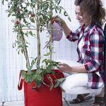 Sac de culture, sac potager Veggie Bag, Tomates, fraises...couleur rouge. 35x36 cm. de la marque Botanyland image 1 produit